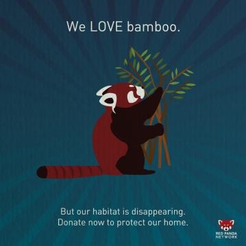bamboo_panda1