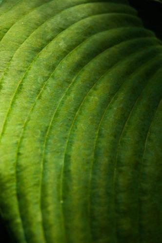 macro-leaf